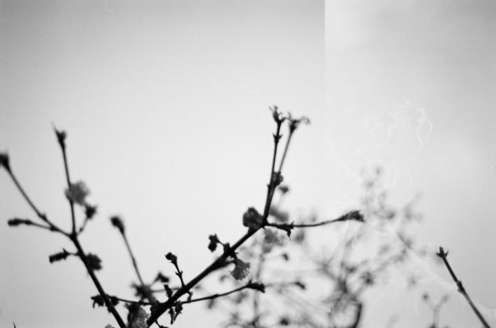 Winter flowers b&w by CDG